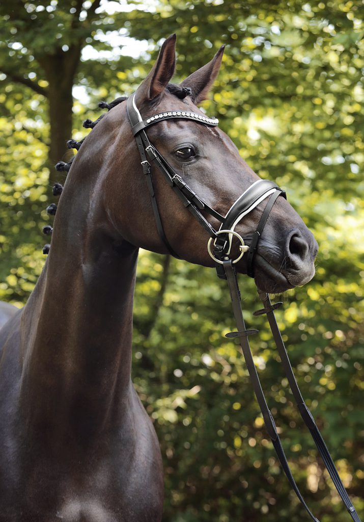 Brown horse wearing black-and-white bridle standing in front of trees.