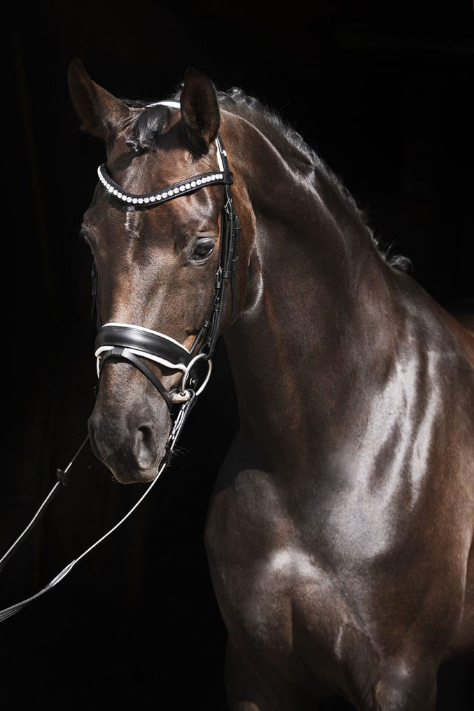 Brown horse wearing a black and white bridle.