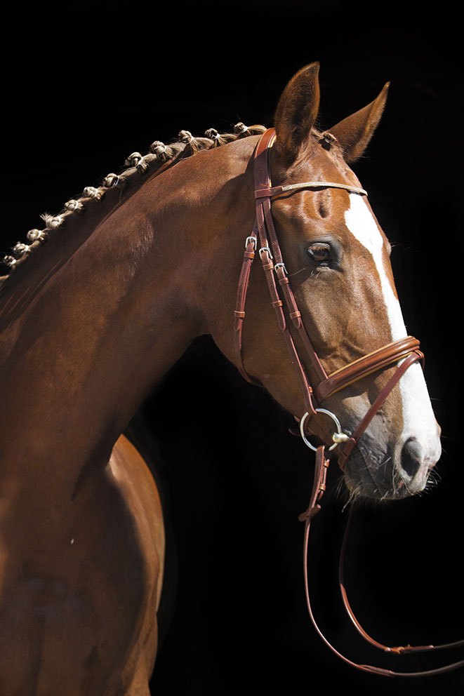 Brown horse wearing brown leather bridle.
